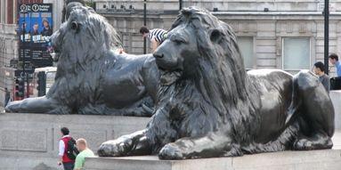 Lions Pinterest