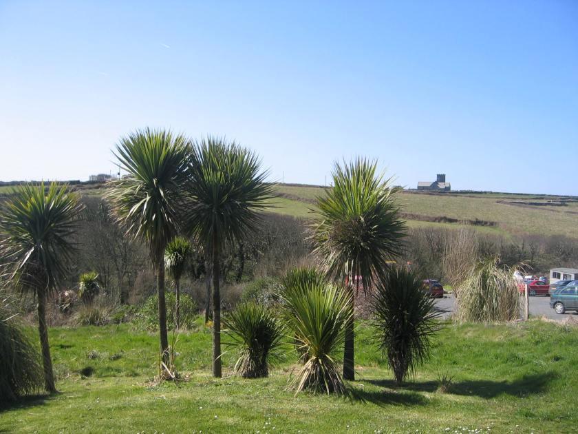 Palms 1 England